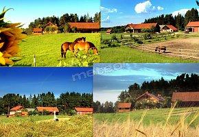 Agroturystyka Borowski Las