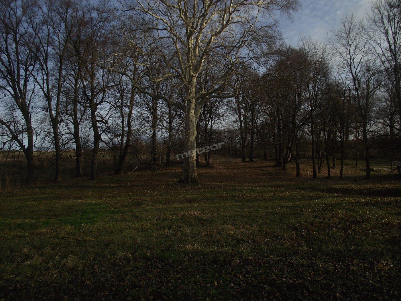 Ośrodek znajduje się na terenie zabytkowego parku, na którego terenie rośnie się okazały Platan (objęty ochroną przyrody) w pierśnicy ok. 6m obwodu