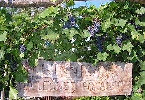 Winnica i Pokoje na Leśnej Polanie